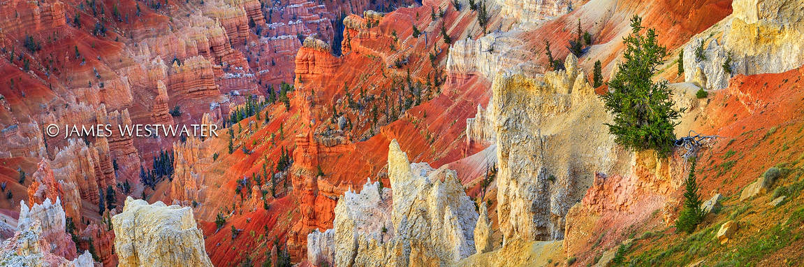 Rainbow Ridge, Cedar Breaks National Monument, Utah
