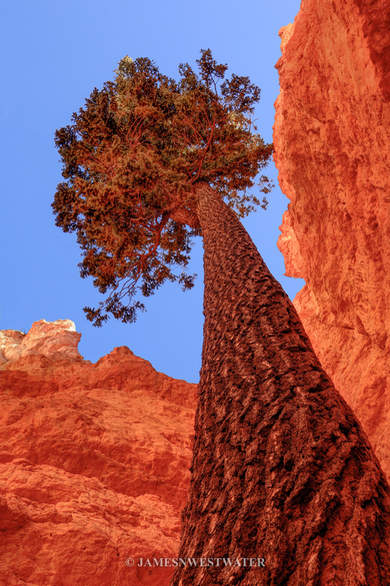 Reach for the Sky, Bryce Canyon National Park, Utah