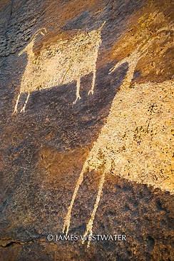Big Horn Sheep, Santa Clara River Reserve, Utah
