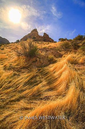 Sun Grass, Notch Peak area, Utah