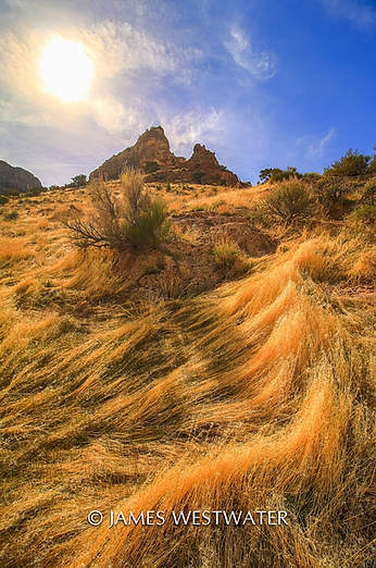 Sun Grass, Notch Peak area, Utah