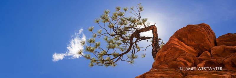 Hanging On, Panorama, Zion National Park, Utah