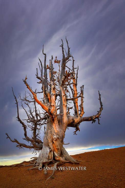 Resilient, Cedar Breaks National Monument, Utah