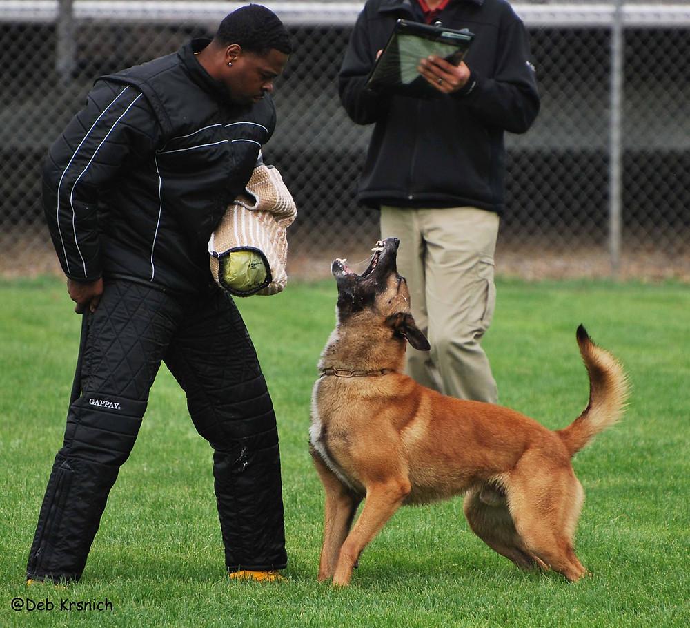Helper Marcus Hampton with Jimmy Honda's dog E'Tienne del Fuego Interno. Photo: Deb Krsnich.