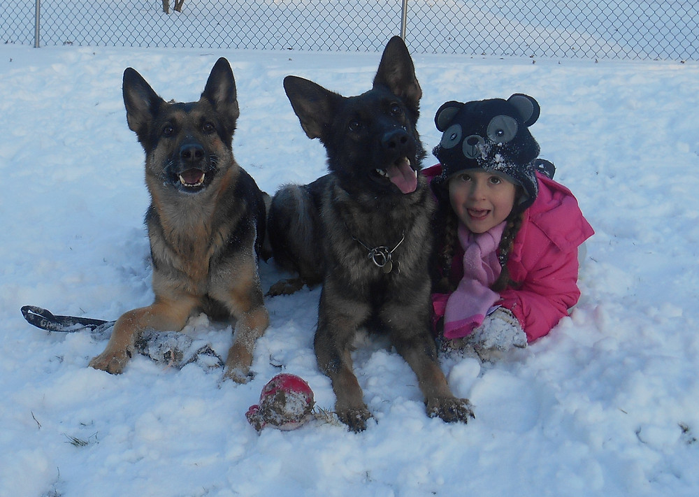 Schutzhund dogs with children