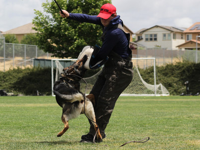 The Inner Workings of Schutzhund Clubs