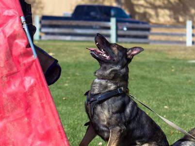 Preparing for Your Schutzhund Club Visit
