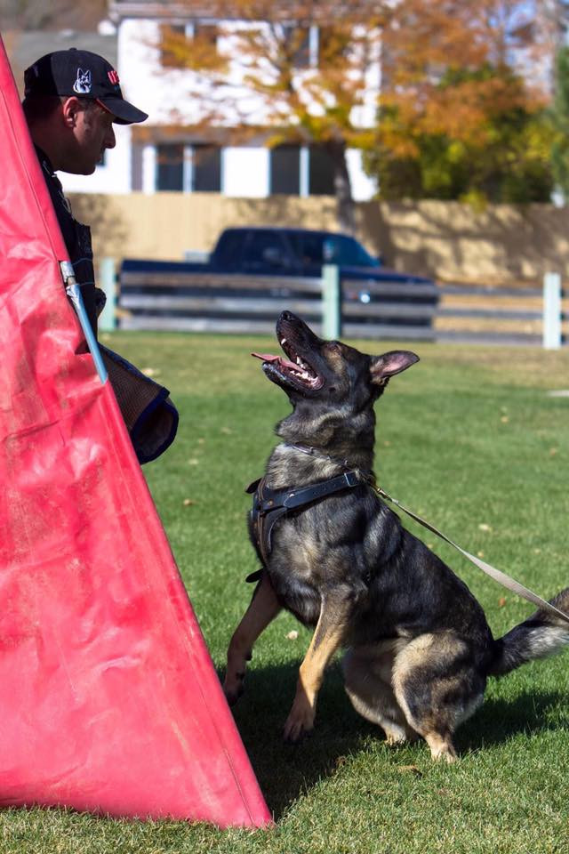 Marie Taylor's Nero showing off a Schutzhund harness. Helper: Shay Lachish. Photo by: Gina Eichert.