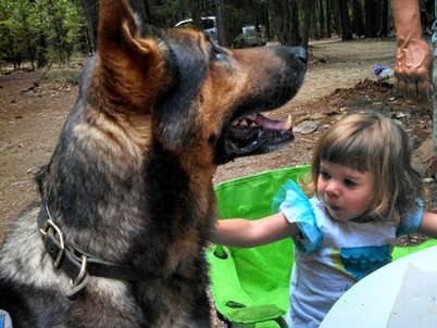 Socializing the Schutzhund Puppy