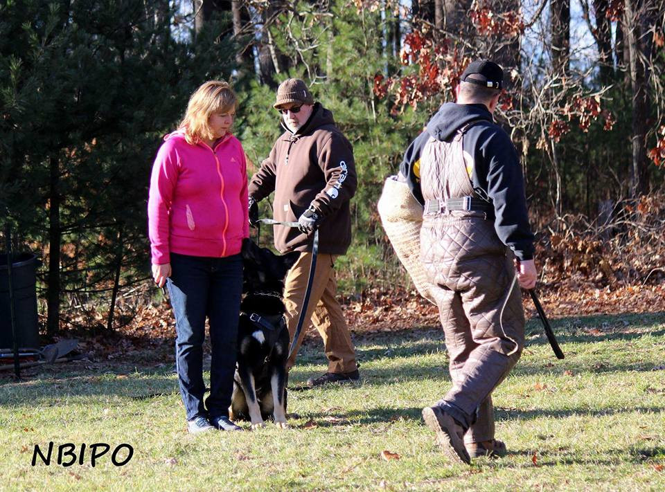 Training protection at North Boston IPO Club is a team effort. Helper Mike Harringtonand Tom Kench work together with Rhonda Greenwood to train her dog Bullet. Photo: Michelle Testa