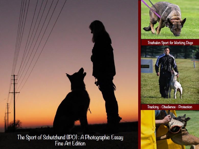 The Sport of Schutzhund: A Photographic Essay