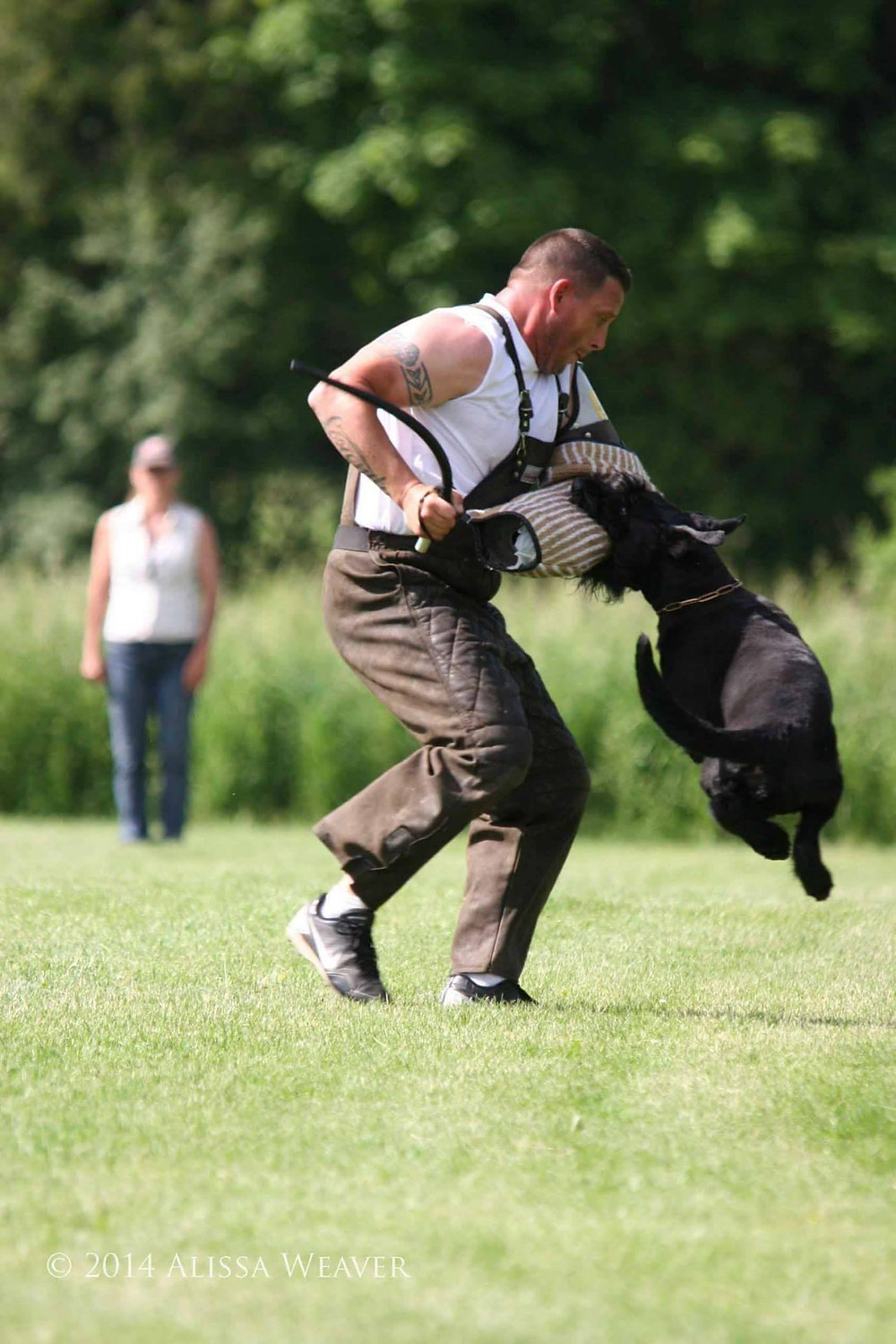 "Michelle Testa's male Giant Schnauzer ""Quenlin"" with helper Scott Carlson. Photo: Alissa Weaver."