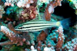 09_05_2014_9999_79 I AM FISH (1).jpg