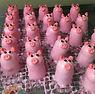 Polly Pig.jpg