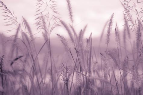JAY YAO PHOTOGRAPHYArt_Nature_20121127-_