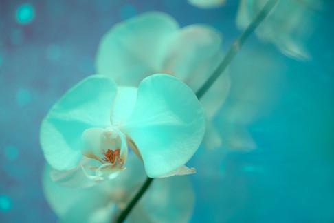 JAY YAO PHOTOGRAPHYArt_Nature_JAY YAO PH