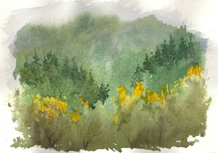 2014 Foggy Sierra