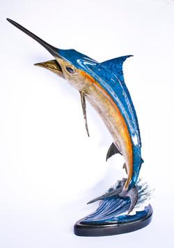 Large Blue Marlin