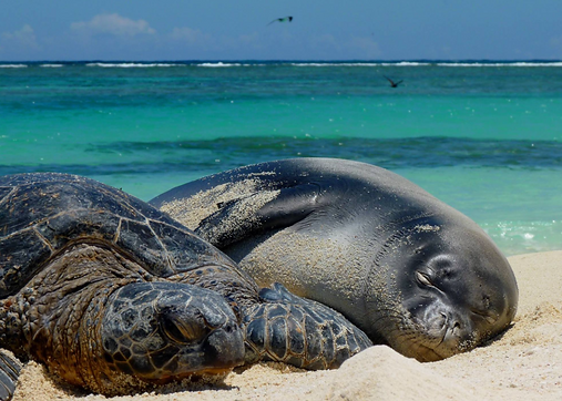 Monk Seal & Turtl