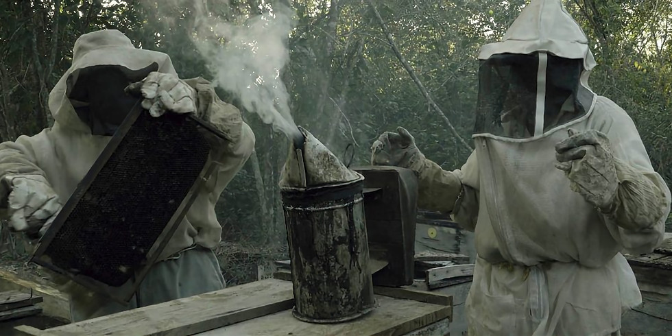 WHAT HAPPENED TO THE BEES? - 17:30
