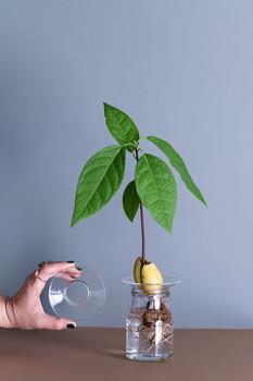 bo| avocado nest
