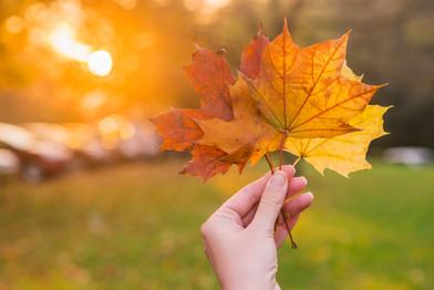 hand-holding-yellow-maple-leaf-autumn-ye