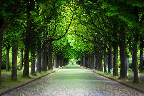 country-road-running-through-tree-alley.