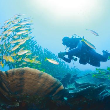 גן עדן לצוללים