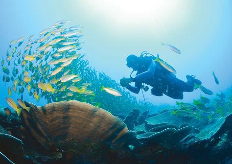Miniloc Diving 1-Erwin Lim (2).jpg