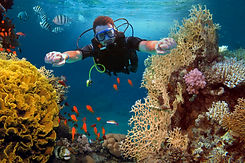 happy-man-dives-among-corals-fishes-ocea