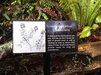 plant-identification-signs.jpg
