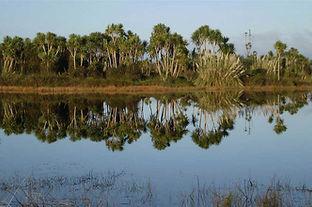 BOP-wetland.jpg
