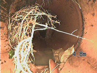 clear roots from drain.jpg