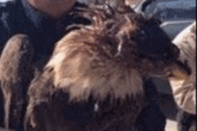 Urgent Call to Intercession: American Bald Eagle Shot in Anahuac Texas was a Prophetic Sign