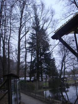 nvv-baumfaellaktion-2.februar-2011-001_lbb