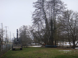 nvv-baumfaellaktion-2.februar-2011-019_lbb
