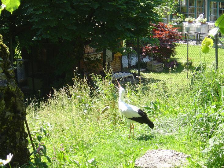 tierpark-goldau-044_lbb