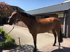 "Good luck to ""Fewaldine"" and Thaisa and Matt Hollberg equestrian USA."