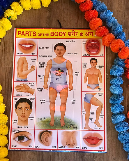 Indian School Poster - Parts of the Body