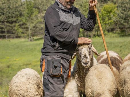 Нези Байрямов и стадото от Баблон