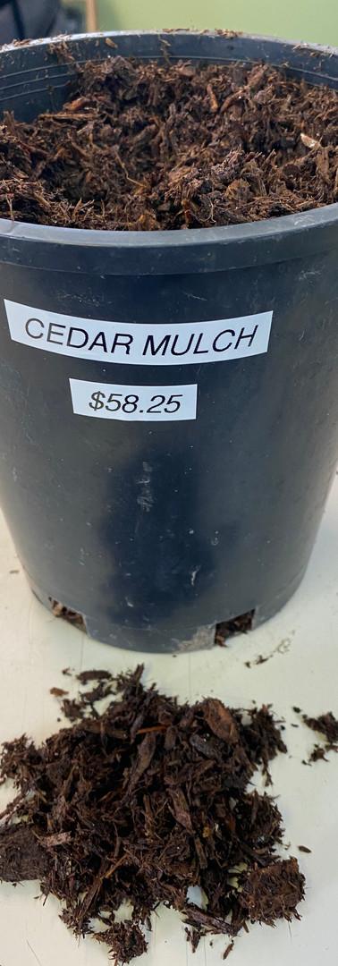 Atlantic White Cedar Mulch