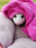 Possum Penny.jpg