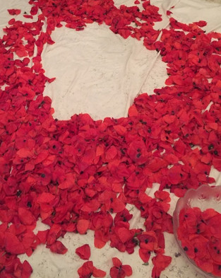 fleurs de coquelicot cueillies.jpg