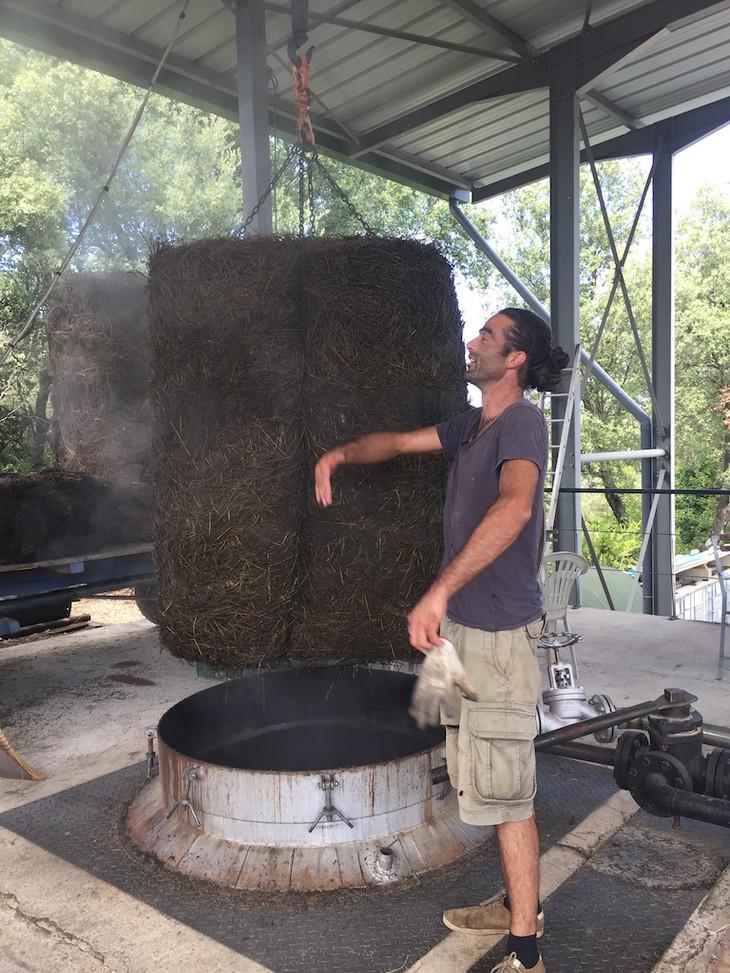 distillation lavandin Herbier des Garrig