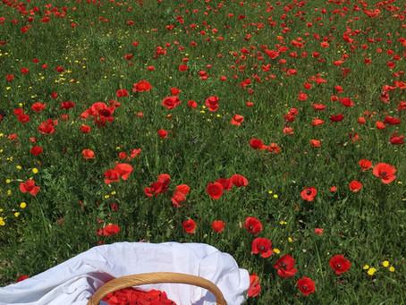 Les sirops de printemps pour réjouir vos coeurs et vos papilles !