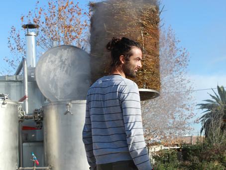 Distillation de fenouil