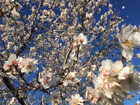 Où trouver L'Herbier des Garrigues en février ?