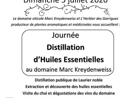 Distillation publique de Laurier noble le dimanche 5 juillet 2020 !