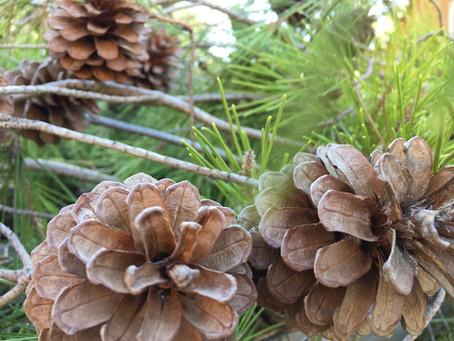 Nouvelle senteur des bois à L'Herbier des Garrigues