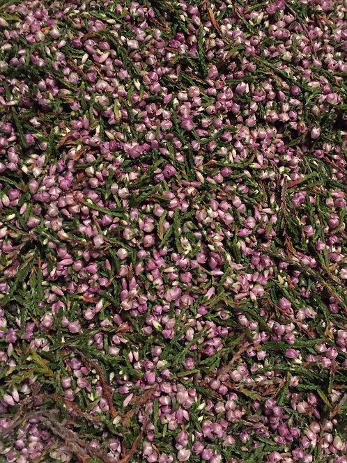 Bruyère commune - Calluna vulgaris